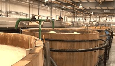 Tanques de fermentação  tequila agave