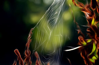 Fauna, Flora, Tiere, Vögel, Fische, Insekten, Blumen, Bäume, Berge, Meer, Ozean, Natur, Sonne, Mond, animals, birds, fish, insects, flowers, trees, mountains,