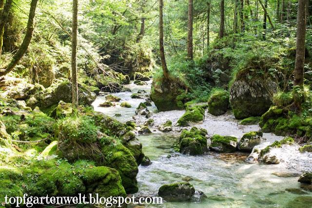 Wildbach Bluntautal | Weg zur Bärenhütte | Kinderwagenwanderung - Blog Topfgartenwelt