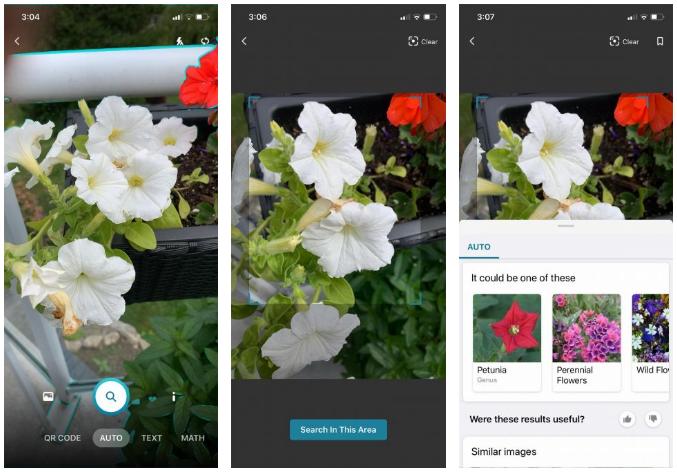Aplicaciones para identificar plantas desde Android y iPhone