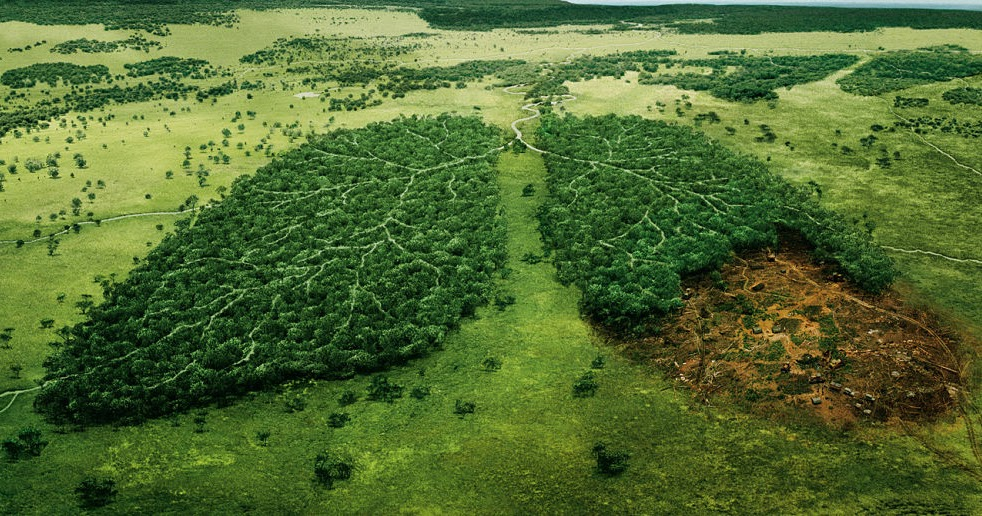 the negative effect of deforestation Effects of deforestation - the effects of deforestation are devastating plant and animals species go extinct learn more about the effects of deforestation.