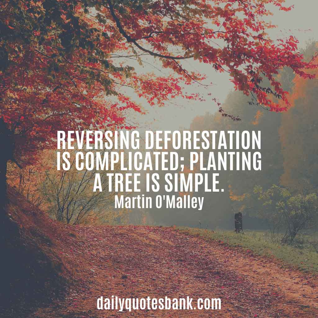 Inspirational Quotes About Planting Trees For Future Generations