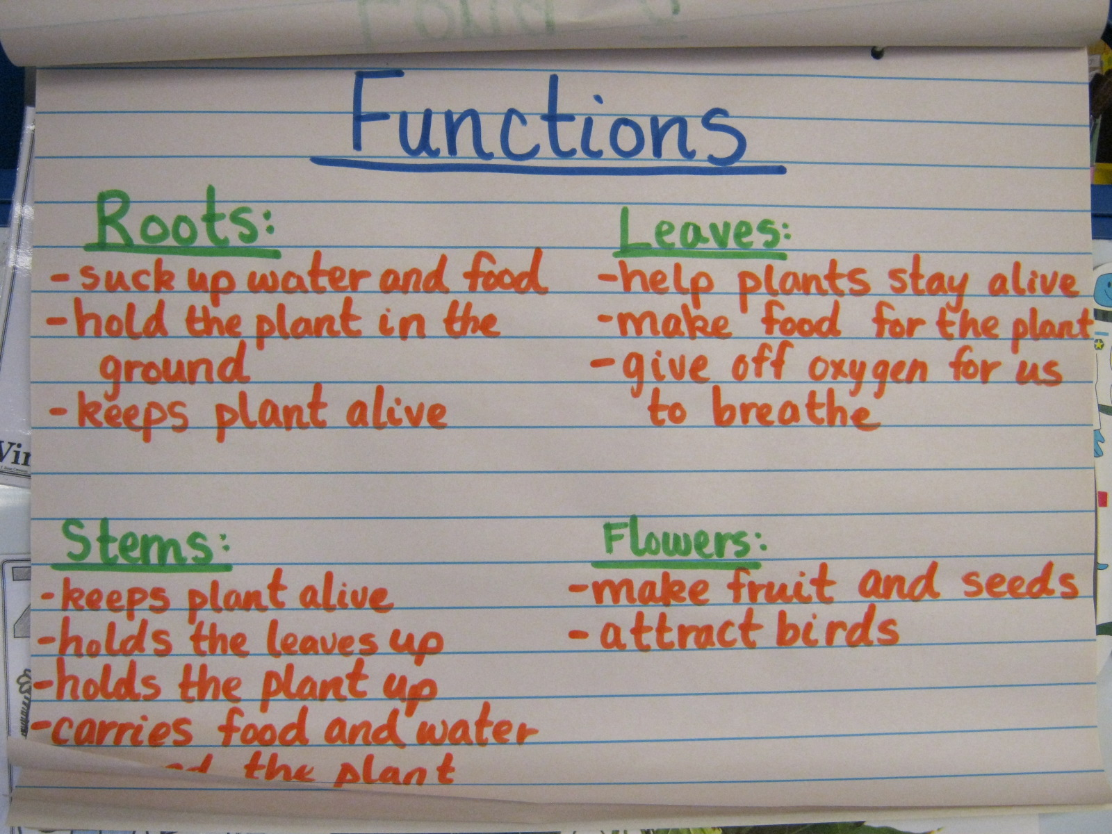 Plant Parts And Functions For Kids