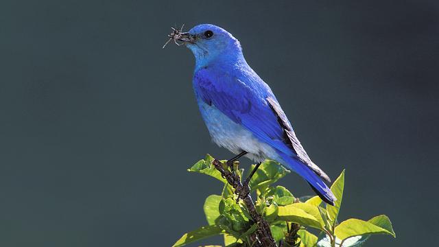 màu xanh từ loài chim