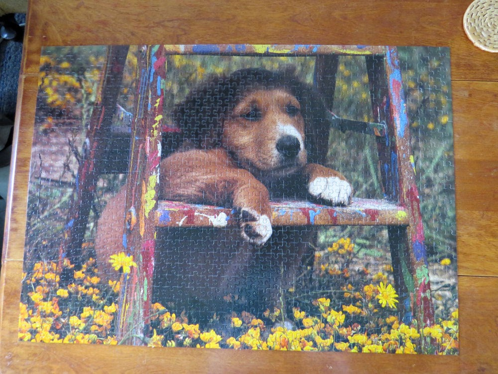 Pooch on a Ladder puzzle