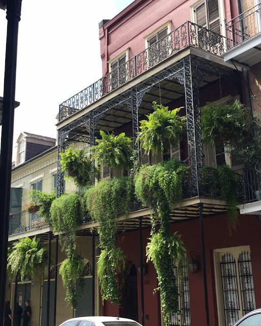 French Quarter building with ferns on railings