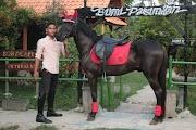 Lafa Stable Berkuda dan Memanah