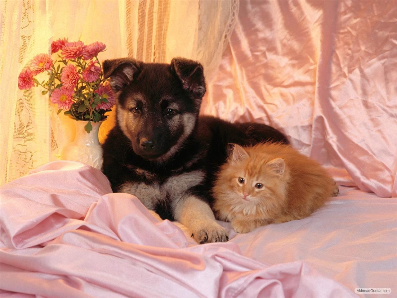 Perawatan Kucing Kucing Akur Dengan Anjing Mesra