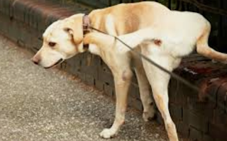 7 Tips on How to Get Rid of Dog Urine Odors