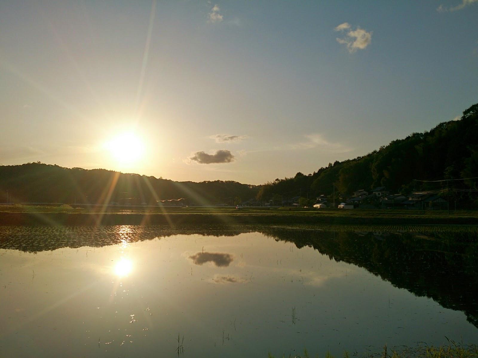日本のウユニ、もとい田植え直後の水田