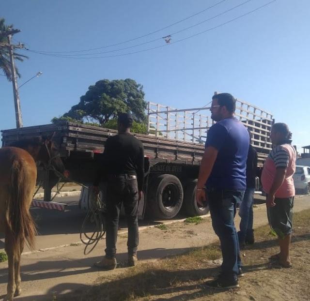 Prefeitura de Goiana realizar apreensões de animais no litoral