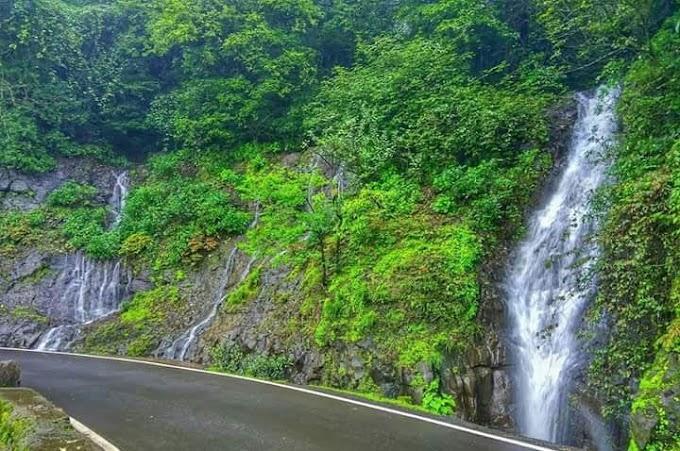 Greenary Monsoon Nature