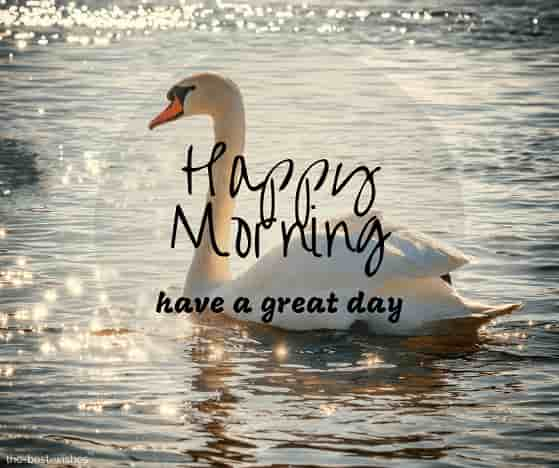 happy morning nature with swan