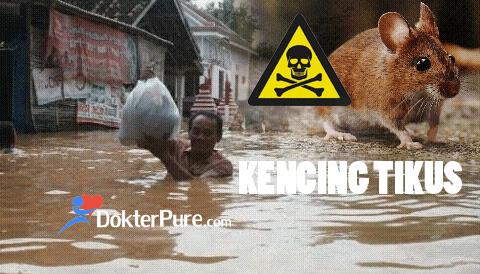 Waspada Penyakit Kencing Tikus saat Banjir