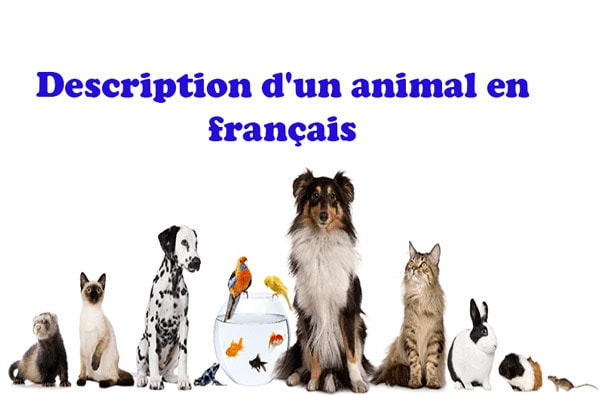Description d'un animal en français