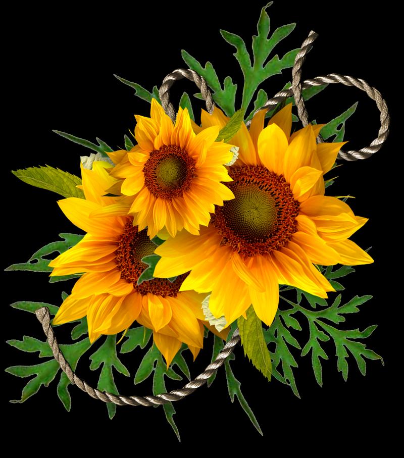 Sunflower Png Images Transparent Background: CheyOkota Digital Scraps: Autumn 5 For 5