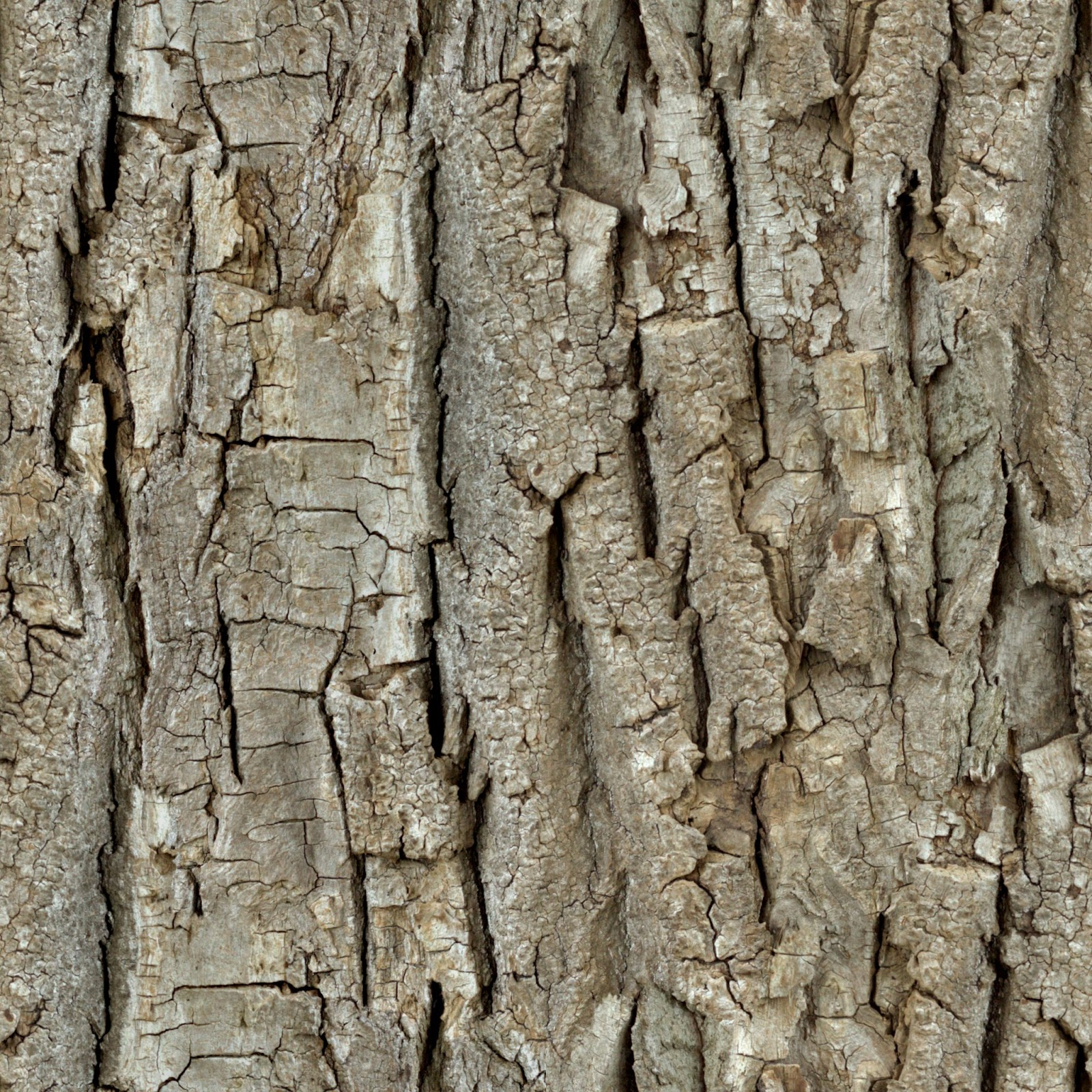(Wood 26) tree bark seamless texture 2048x2048