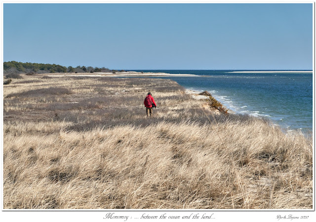 Monomoy: ... between the ocean and the land...