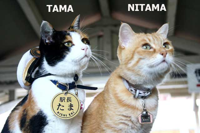 cat stationmaster appointed at Japanese train station