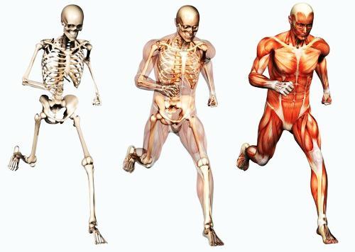 Musculos Movimiento, Hd 1080p, 4k Foto