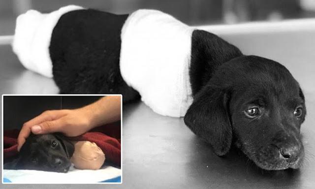 В Турции щенку отрубили лапы и хвост. Его смерть вызвала в стране резонанс