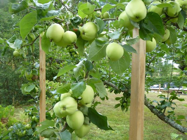 Äppelmarmelad med smak av karamell