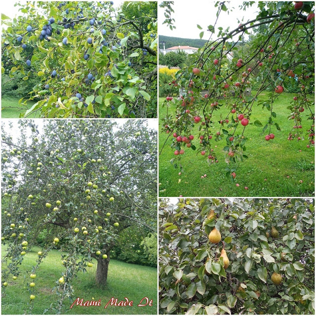 Obstgarten - orchard
