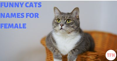 Funny Cats Names for Female