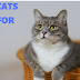 Here Some Famous Funny Cats Names for Female