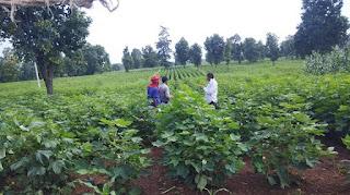 कृषि विकास विभाग उपसंचालक श्री एम.एस.देवके ने जानकारी