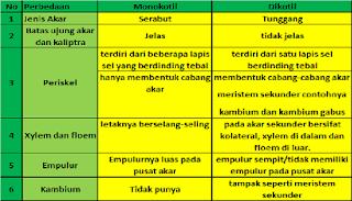 tabel perbedaan tumbuhan monokotil dan dikotil,beserta contohnya,secara anatomi,lengkap,pada batang,contoh tumbuhan monokotil dan dikotil,