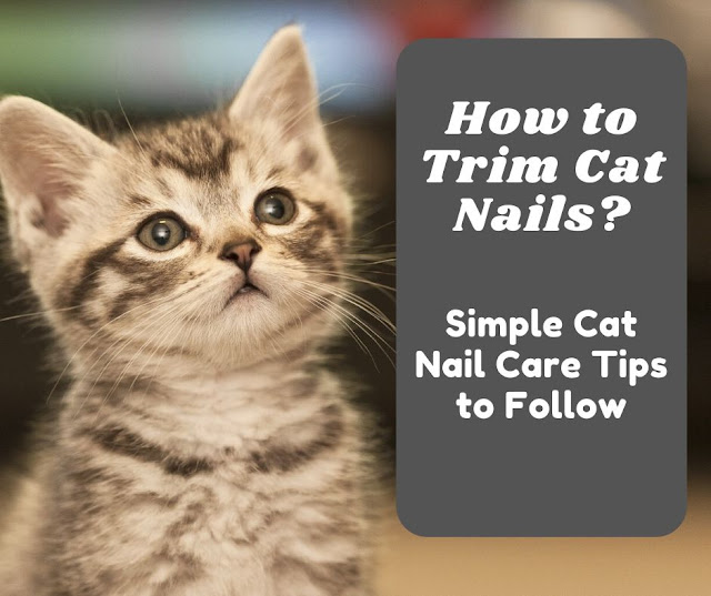 How to Trim Cat Nails? Cat Nail Care Tips