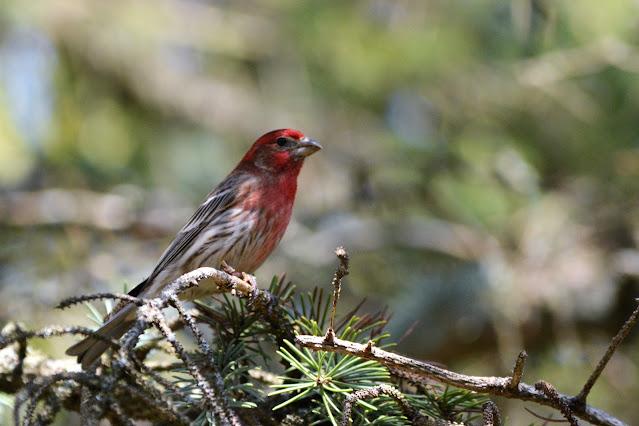 Wild Wednesday: Ottawa Valley Wild Bird Care Centre