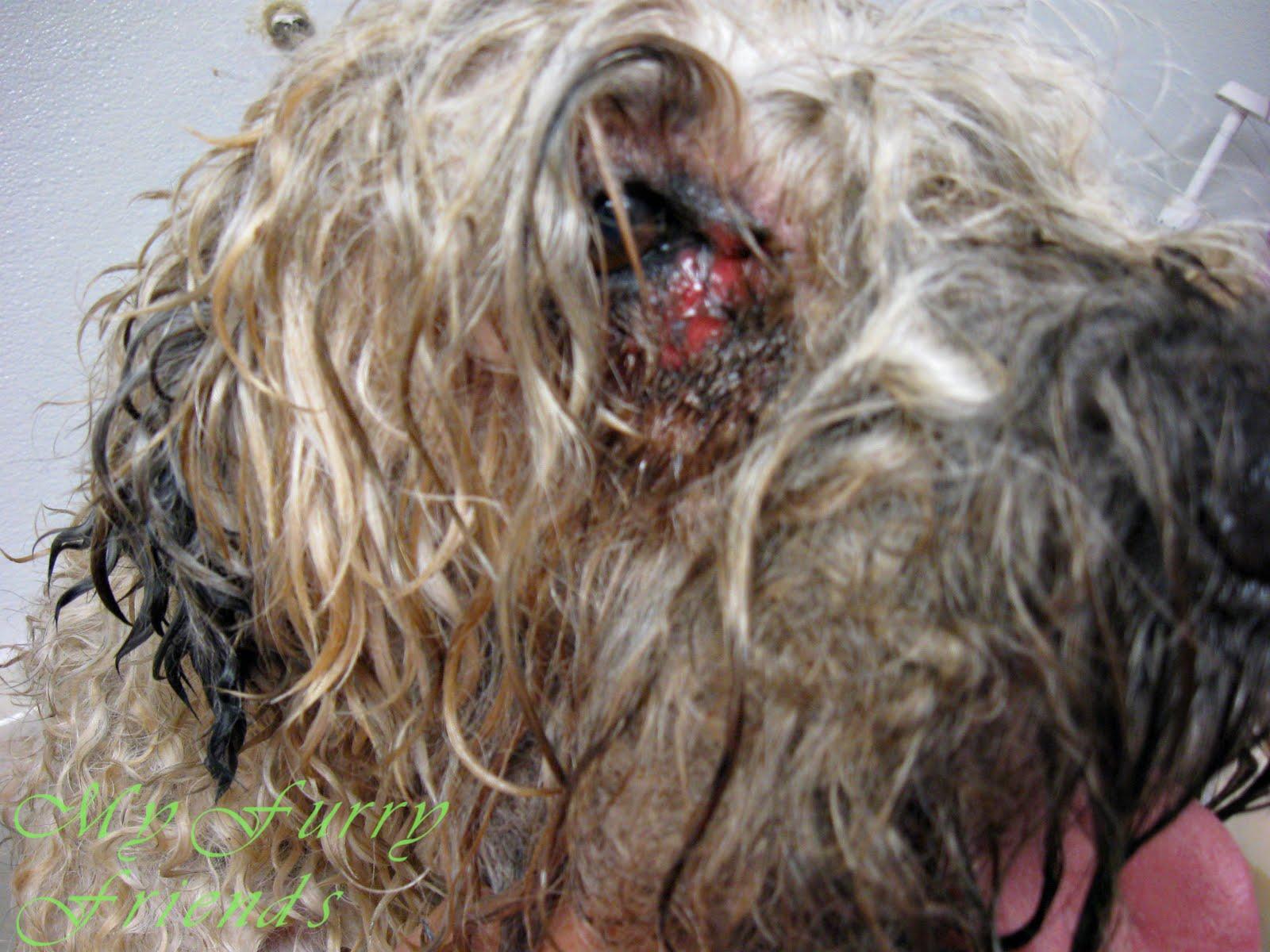 Cutting Around Dogs Eyes