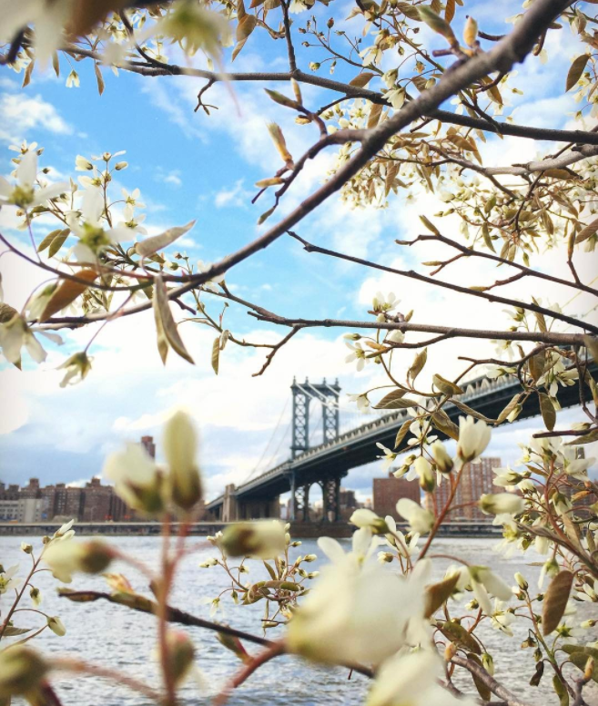 Brooklyn Bridge Park | with @newyorkcity instagram