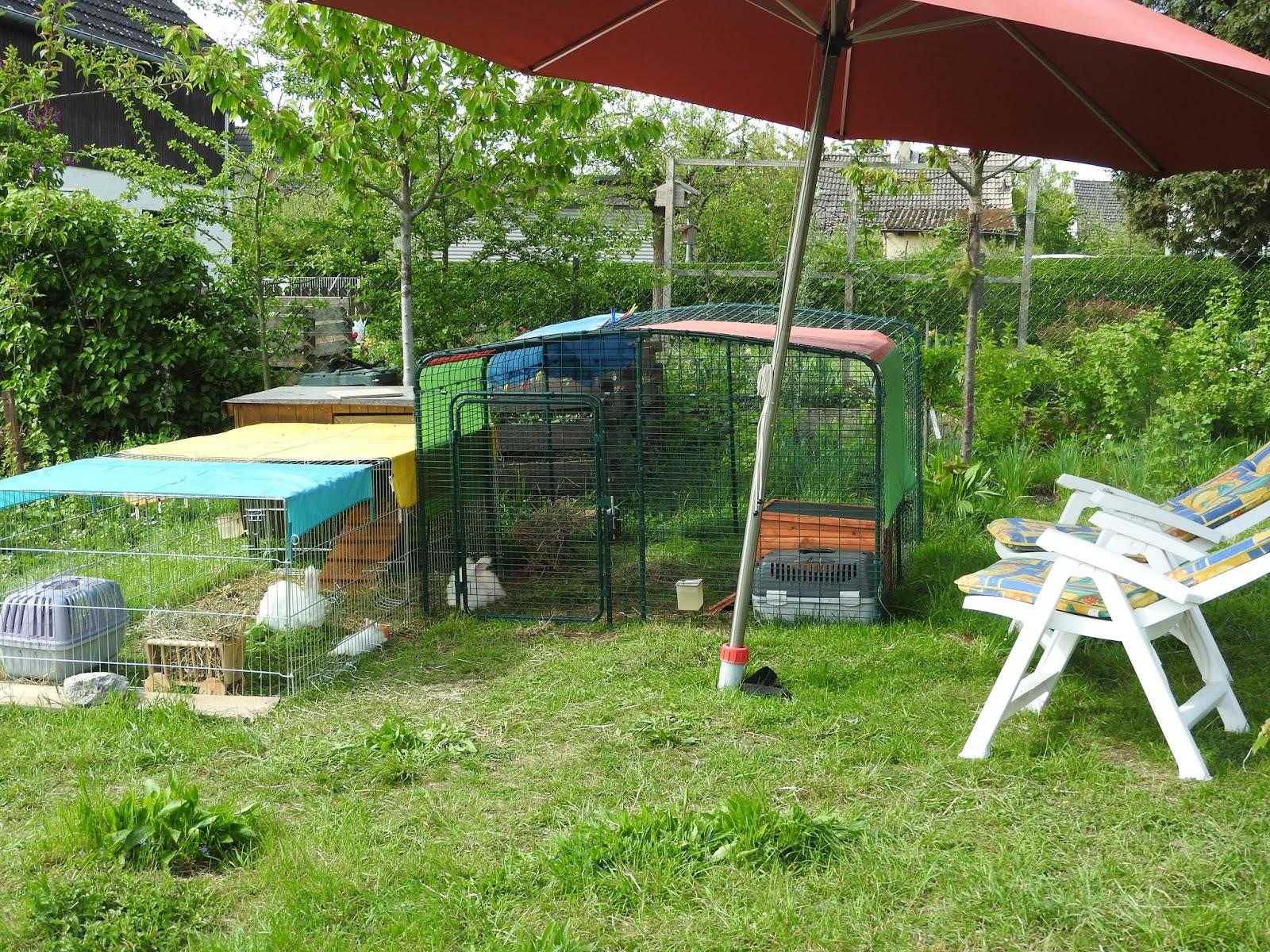 Angora Kaninchen Kaninchen Im Garten