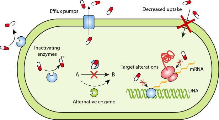 Antibiotic Resistance developed in E. coli