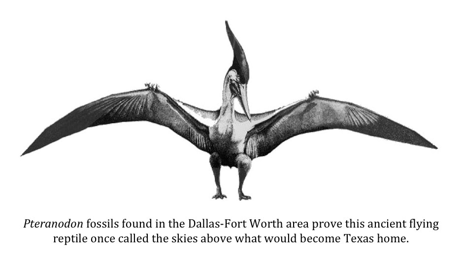 Texas Cryptid Hunter Do Pterosaur Fossils Found In The