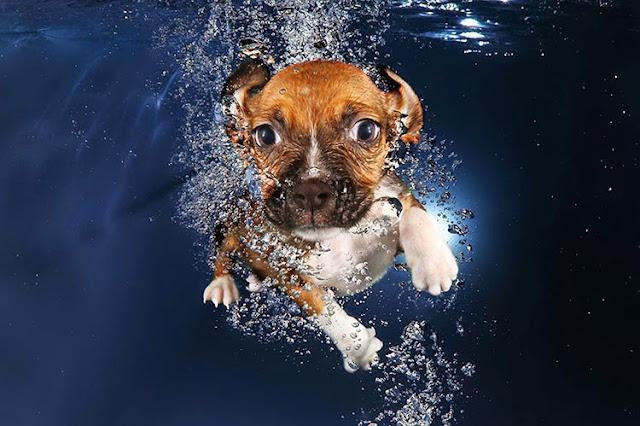 Cachorros bajo el agua por Seth Casteel