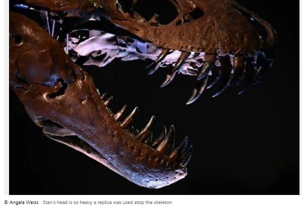 The T-Rex skeleton can fetch a record price at a New York auction