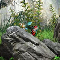 BigEscapeGames-BEG Find t…