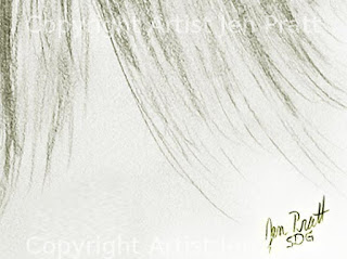 horse drawings, equine art, horse gifts