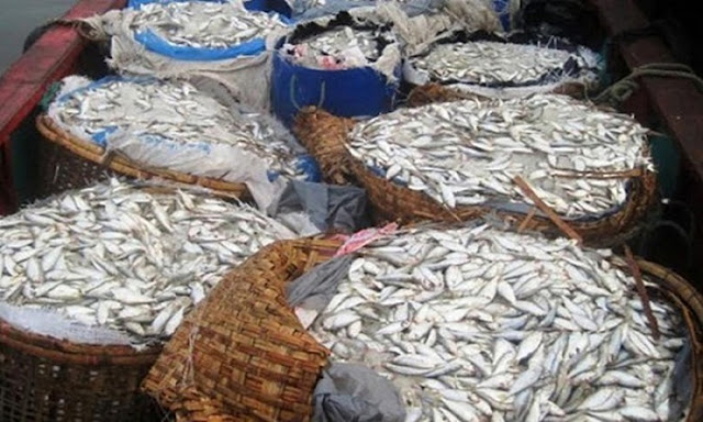 Seized-50-grams-of-jatka-from-passenger-bus-in-Barisal