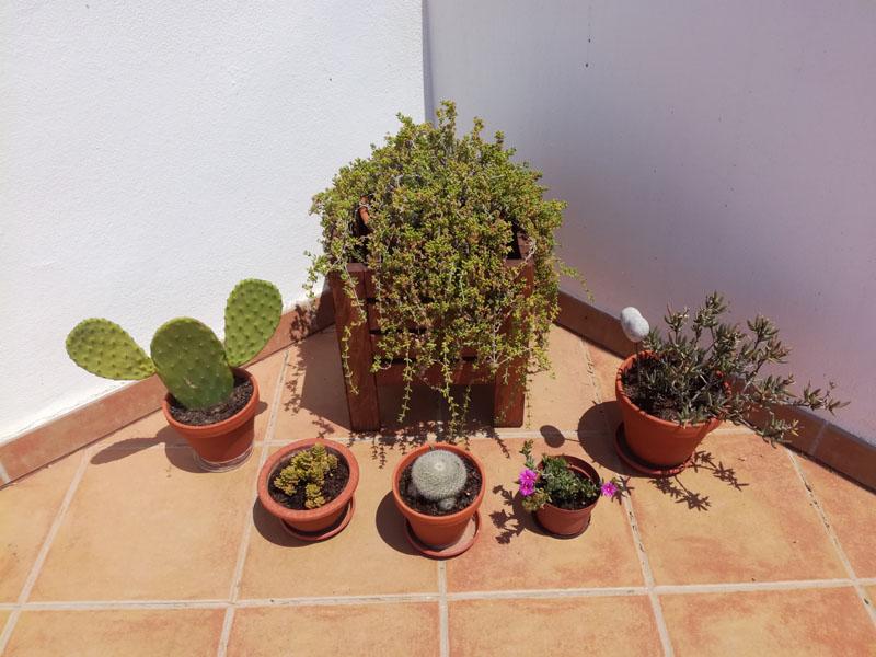 PIante in vaso il terrazza