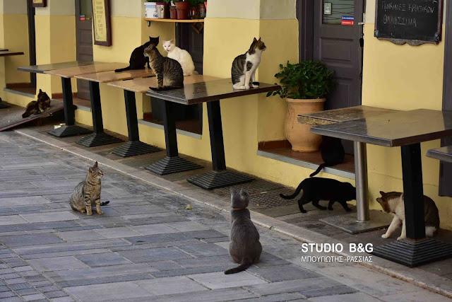 Δεκάδες γατούλες στο παλαιό Ναύπλιο συγκεντρώνονται έξω από τις κλειστές ταβέρνες