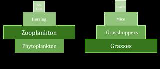Perbedaan piramida biomassa pada ekosistem perairan dan terestrial