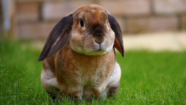 3 achats pour sauver le lapin de Pâques