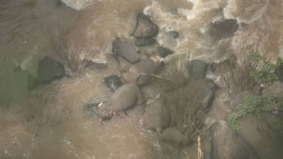 6 elephants killed in Khao Yai National Park's Haew Narok