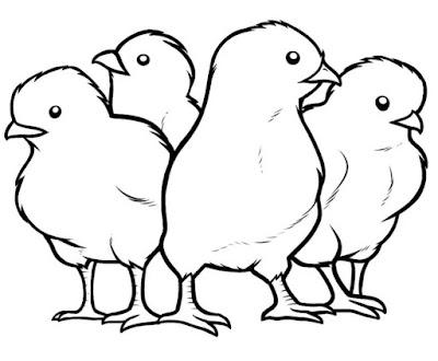Gambar Sektsa Anak Ayam