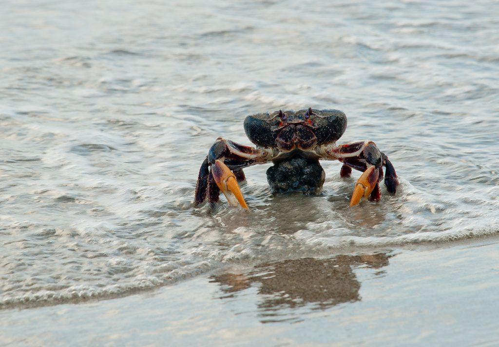 care este vederea unui crab